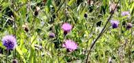 """Idylle """"Bloemen voor vlinders, bijen en mensen"""" – ook voor gemeenten!"""